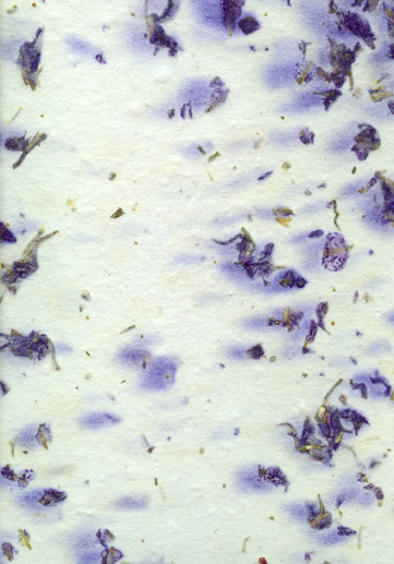 purplelarkspur1